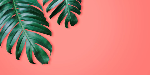 Philodendron tropical leaves on coral color background minimal summer Wall mural