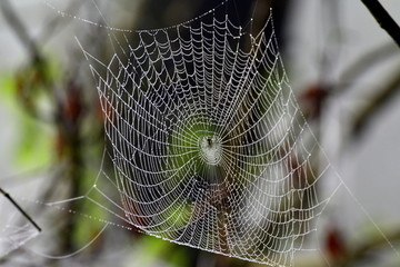 Fototapeta pająk robi pajęczynę obraz