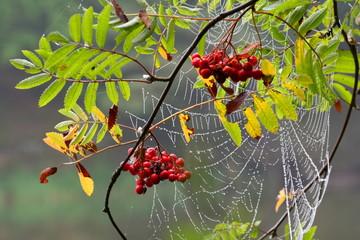 piękna pajęczyna na gałęzi