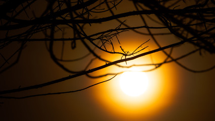 sun through tree branches. Sunset, sunrise with clouds. orange skies and sun