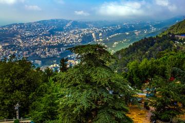 Cedar Tree, the simple of Lebanon