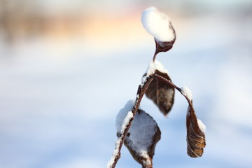 Little plant in snow