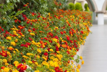 Colourful flower border flowering plants in a garden photo