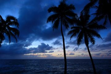 ハワイ島ヒロ/リゾート地、明け方のビーチ