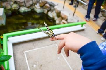 蝶と子供の手
