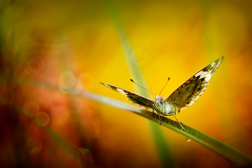 Exotic Beautiful Butterfly - Macro Photo Collections