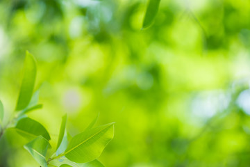 Close up beautiful view of nature green leaves on blurred greenery tree background with sunlight in...