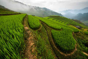 Rice terrace Mountains in Mu can chai, Vietnam