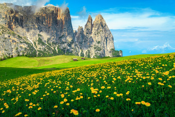 Wall Mural - Alpe di Siusi resort with spring yellow dandelions, Dolomites, Italy