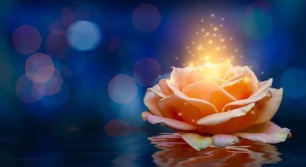 Wall Mural - Orange roses light Bokeh floating blue background Valentines Day