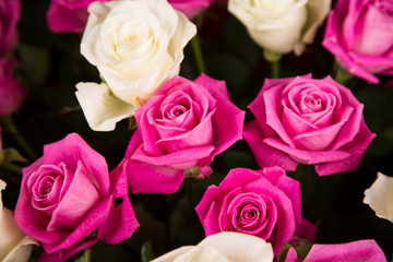 A bouquet of white and pink roses for a Valentine's gift.