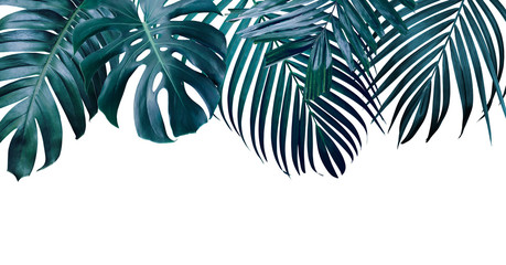 Wall Mural - Summer tropical leaves on white background