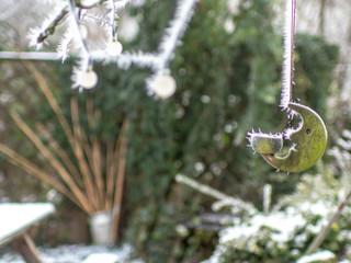 Raureif im Garten, winterfest