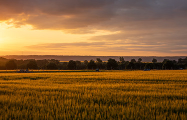 The sunset over wheat field in Germany Wall mural