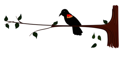 Red Winged Black bird sitting on a branch