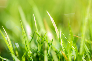 Grass pattern, blur and bokeh