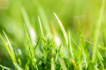 Grass pattern, blur and bokeh