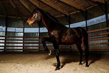 Horse in studio light. Arena
