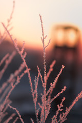 Winter landscape with dry frozen grass on the background of snow covered plain, blue sky and orange sun at sunset. Beautiful natural scenery. Selective focus