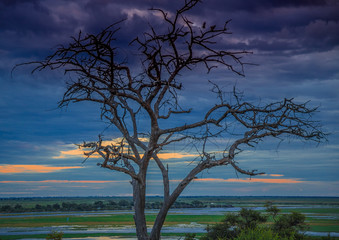 Landscape picture of the Chobe River at the Chobe National Park in Botsuana