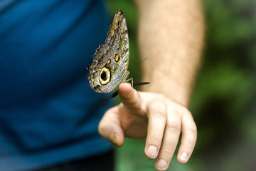 Beautiful butterfly sitting on the man's hand, close up