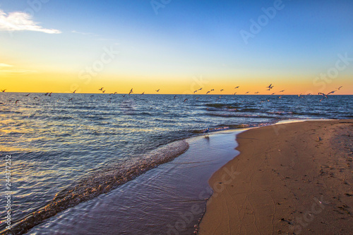 Sunset Beach Background  Seagulls over the blue waters of
