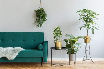 Minimalistic home interior with green velvet design sofa, coffee table and a lot of plants. Copy space for inscription, mock up poster. Brown wooden parquet. Concept of stylish home interior garden. Wall mural
