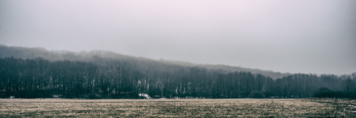 trees and dry grass in a meadow on a foggy day, panoramic landscape. Web banner for design.