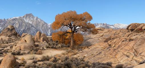 Autumn Tree at Alabamahills