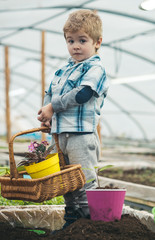 home greenhouse. small baby boy working in home greenhouse. home greenhouse for growing plants. little boy hold floral basket in home greenhouse. turn your hobby into business.