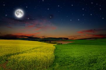 rape field in the night