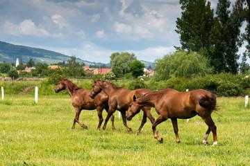 beautiful horses background