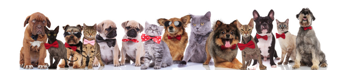 team of elegant cats and dogs standing, sitting and lying