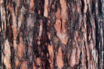 The brown bark on the trunk of pine.