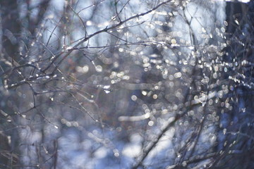 blurred background of forest in the snow with branches
