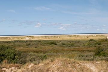blick auf die sand dünen und die see am horizont auf der nordsee insel borkum deutschland fotografiert während eines spaziergangs an einem sommer tag in farbe
