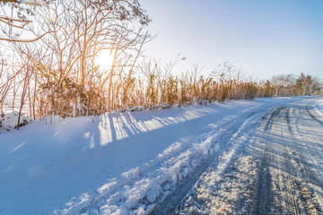 white snow with trees on mountain and street under blue sky with warm sunlight growing, concept of travel and holiday on snow background