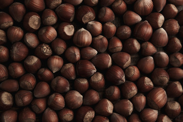 Hazelnut. Fresh organic filbert. Nuts macro background.