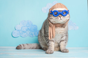 Very funny cat pilot of an airplane with glasses and a pilot's hat, against a background of clouds. A concept of funny and funny animals