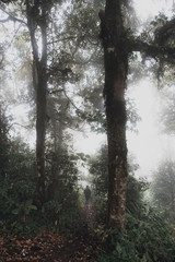 A woman trekking in the jungle of rain forest woods