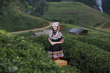 Hill tribe Asian woman in traditional clothes collecting tea leaves with basket in tea plantations terrace, Chiang mai, Thailand collect tea leaves