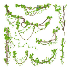 Liana or jungle plant greenery winding branches