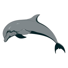 Vector image of a dolphin on a white background.