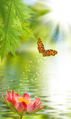 lotus flower and butterfly above water
