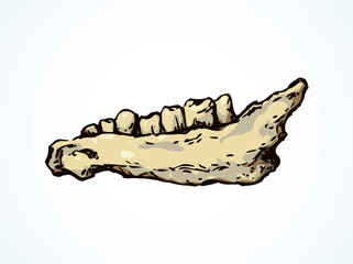 The lower jaw of animal. Vector drawing
