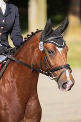 Dressage pony with eyesight head close-up on the tournament course.