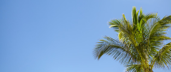 Tropics. Green palm tree on the background of clean blue sky.