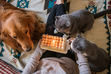 Golden Retriever dog and two cats spend their birthdays with their owners