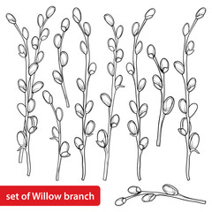 Vector set with outline Willow twigs in black isolated on white background. Branch with blossoming pussy Willow in contour style for springtime design and Easter coloring book.
