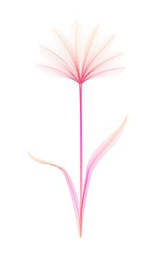Flower x-ray or blend effect. Floral design. Elegant bloom